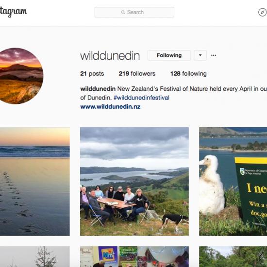 Wild-Dunedin-Instagram